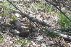 scoiattolofede