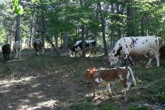 mucchesubeiran