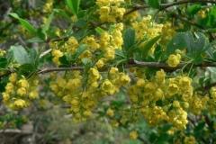 crespinofiori
