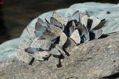 farfalleagrappoli