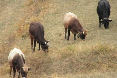 muccheinfila