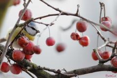 cinciarellatraifrutti