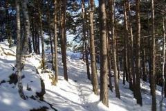 sentiero-poggio-dei-pini-ribetti2